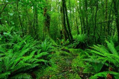 Lush rainforest path stock vector