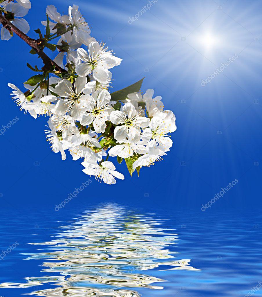 Spring flowers tree in sun light