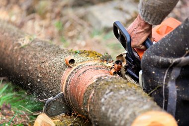 Lumberjack cutting a tree trunk with chainsaw