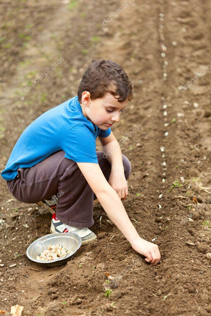 Cute kid planting garlic