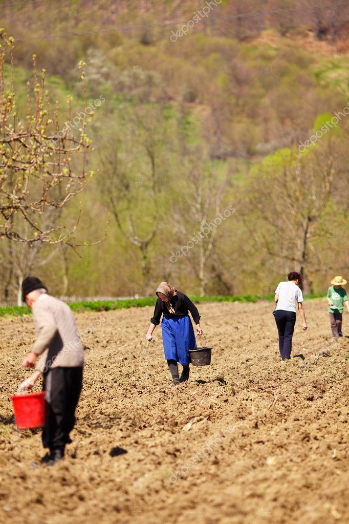 Family of farmers sowing their land