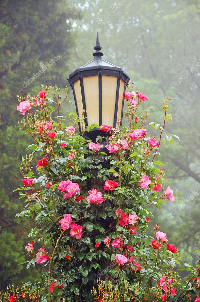 Lamp post with pink roses