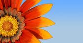 kincs narancs virág