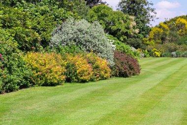 Park vegetation