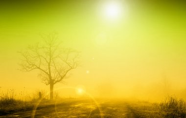 Misty sunrise with lonely tree in fog