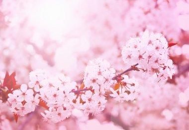 Spring blooming