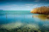 modré jezero s reed na léto