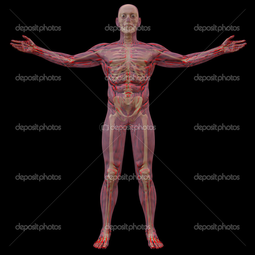 Körper — Stockfoto © dimdimich #5811381