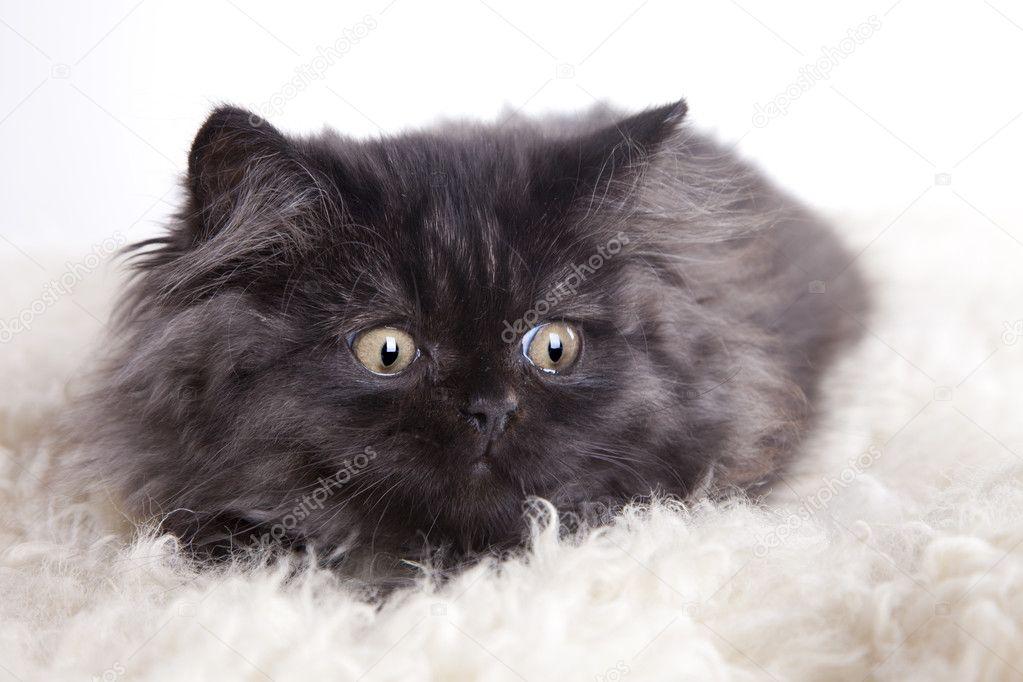 černá lesbička kočička jíst fotky