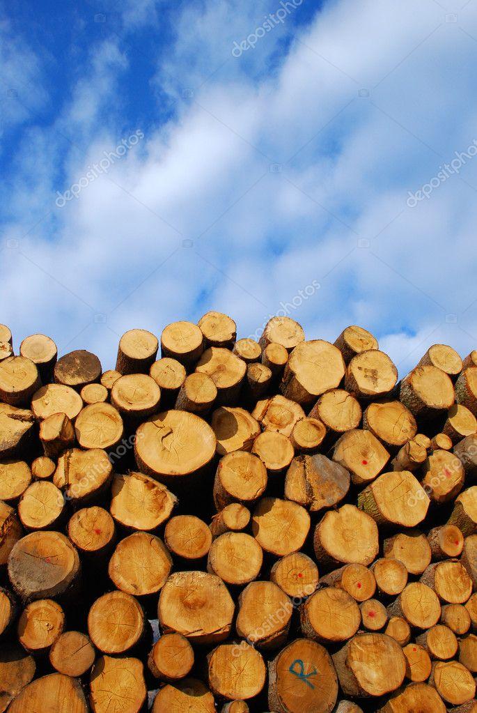 Pile of log - Dolomites