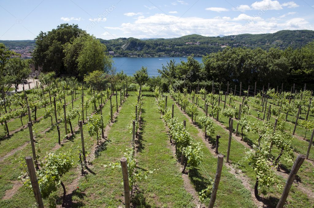 Vineyards overlooking Lake Maggiore