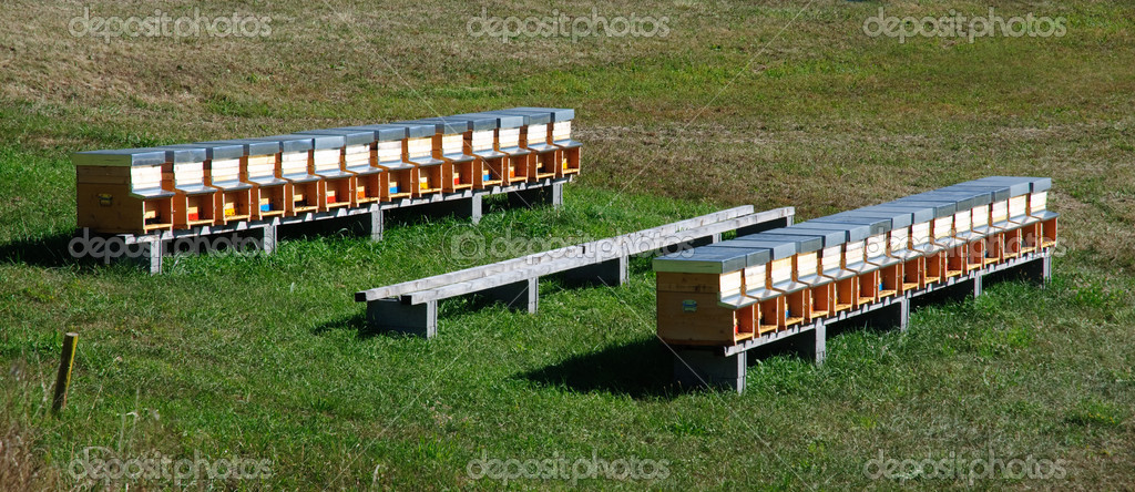 Bee hives (apiary) in a field