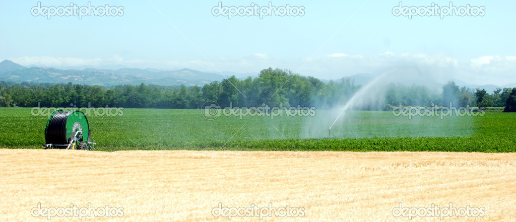 Irrigation on a wheat field