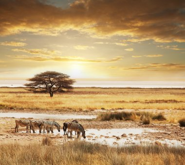 African safari stock vector