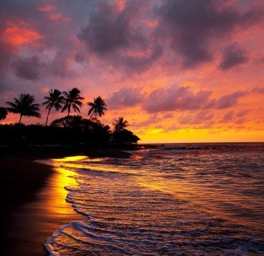 Tropical beach on Hawaii