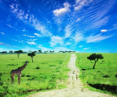 African landscapes stock vector
