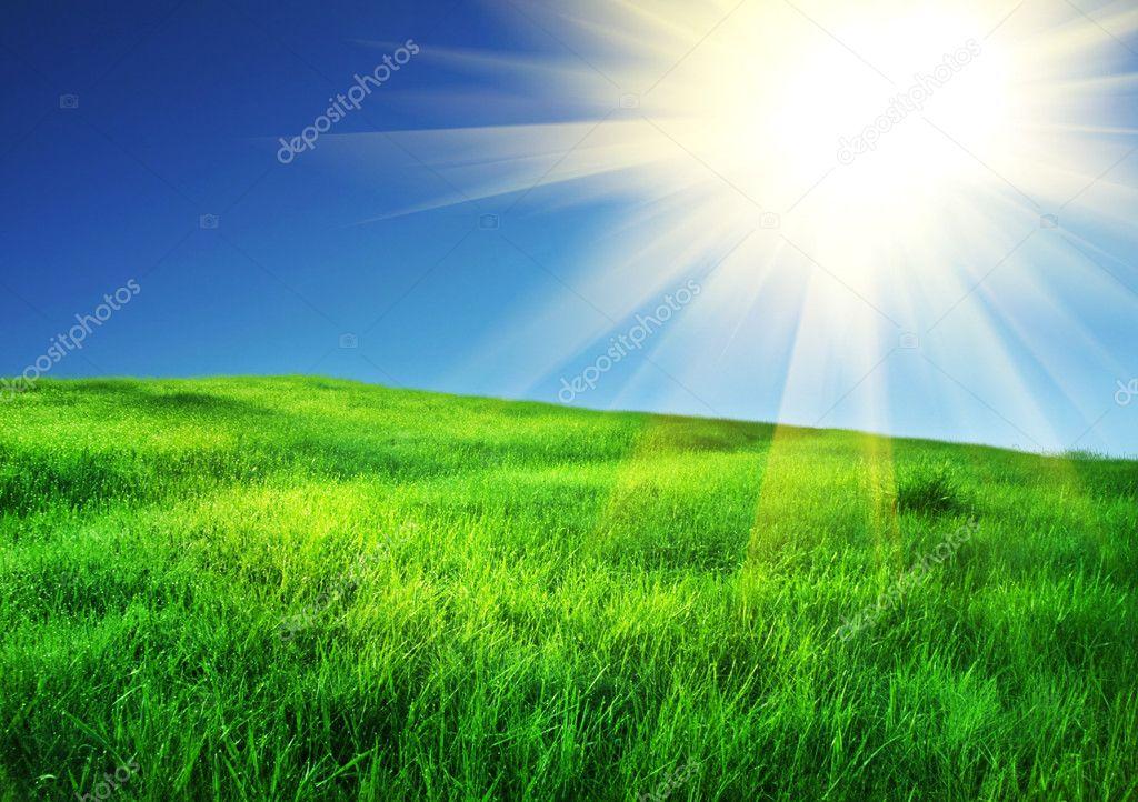 Фотообои Field and sunny sky