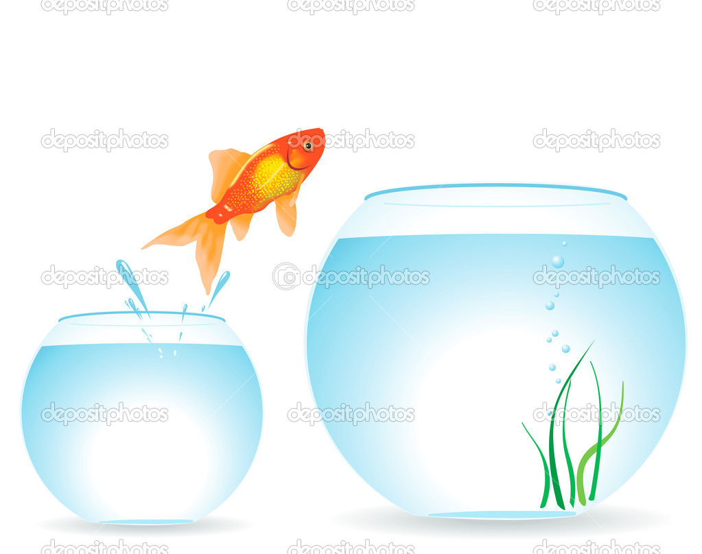 Two aquariums and fish
