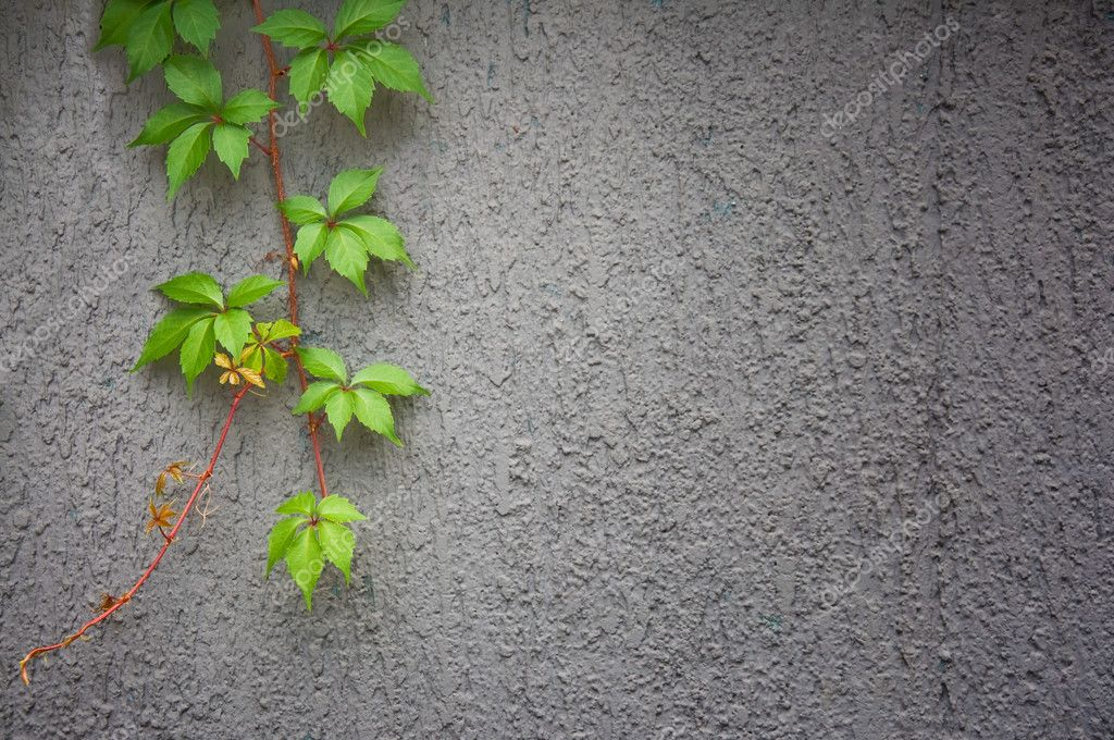 Ivy against wall