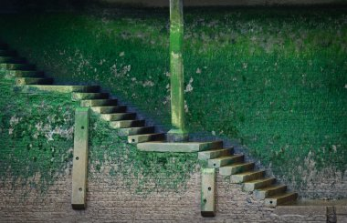 Old stairs covered with green vegetation