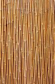 Fotografie natürlichen Bambus-Textur
