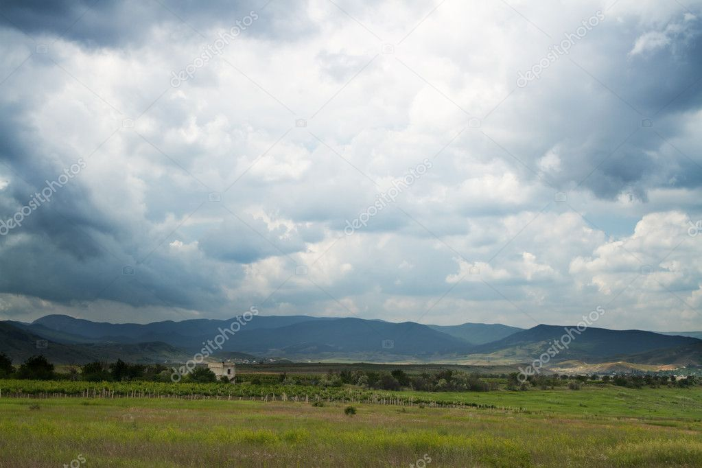 Vineyards with mountains on background