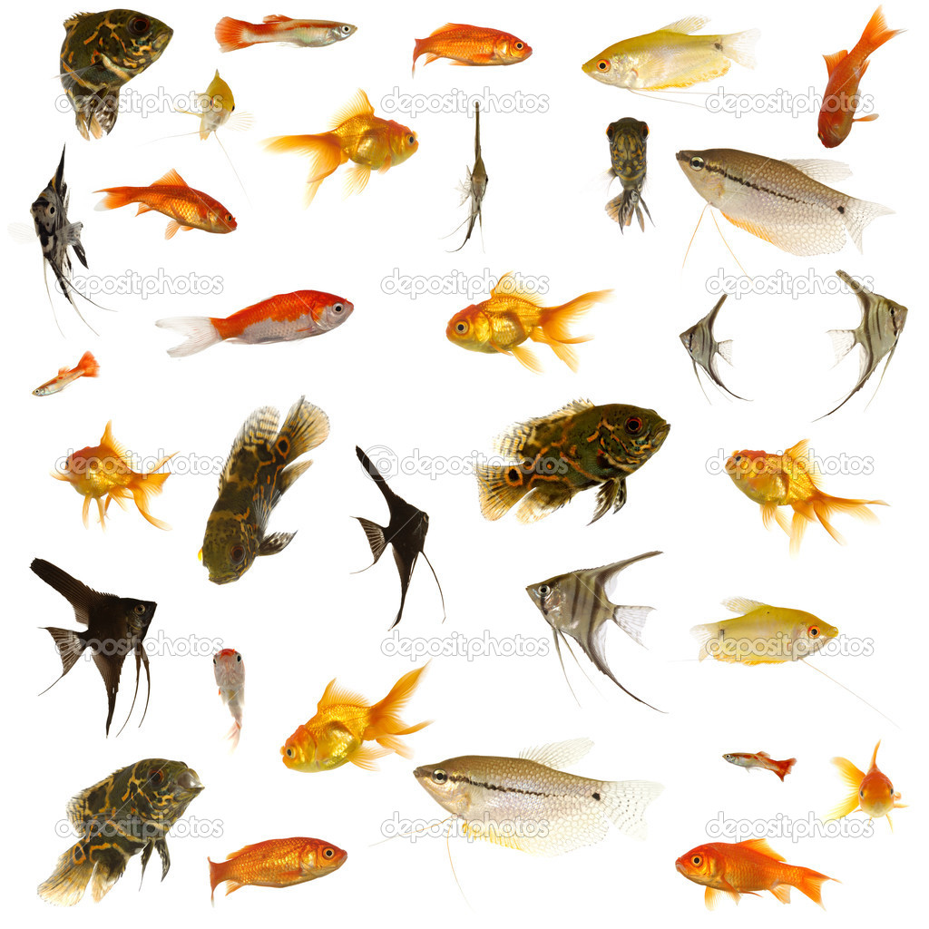 Fish collection. 5000 x 5000 pixels.