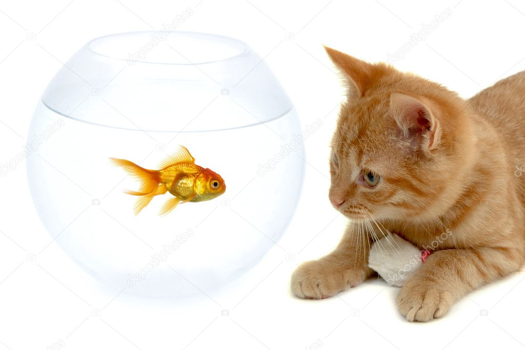 Cat fish and mouse