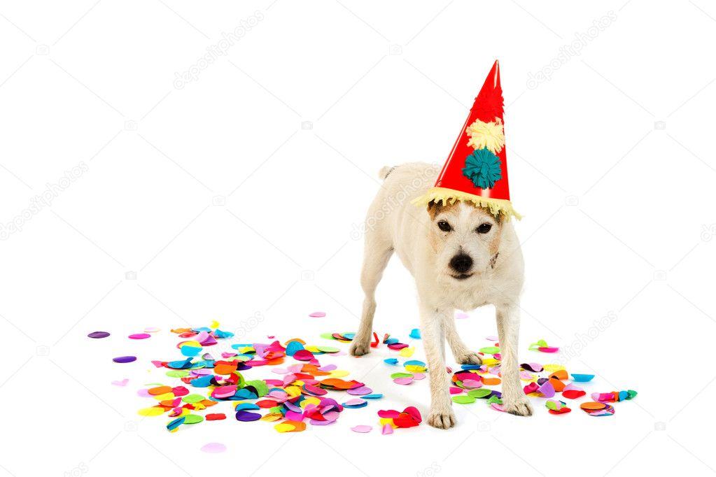 Geburtstag Hund Stockfoto C Ivonnewierink 5931206