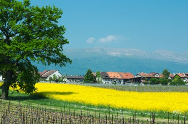 Swiss farms and vineyards