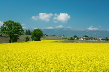 Swiss farms and meadows