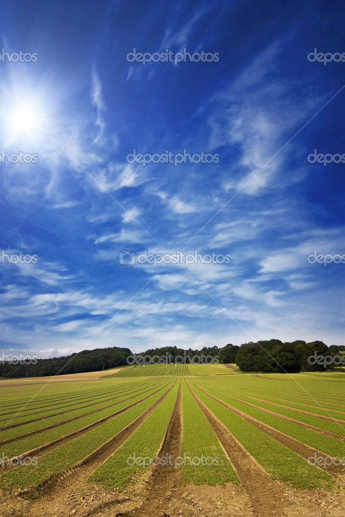 Farmland furrows in perspective with blue skies