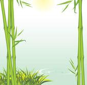 Zelený bambus roste na břehu řeky