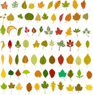 Vector leafs illustration
