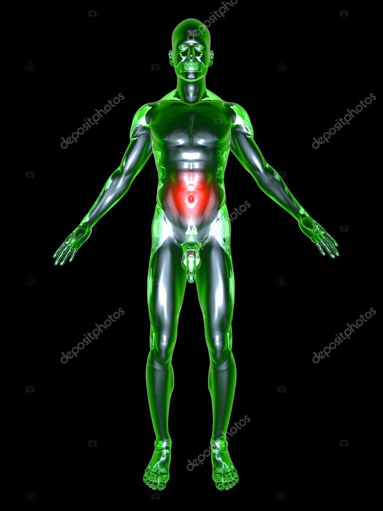 Bauchschmerzen - Anatomie — Stockfoto © Spectral #5994214