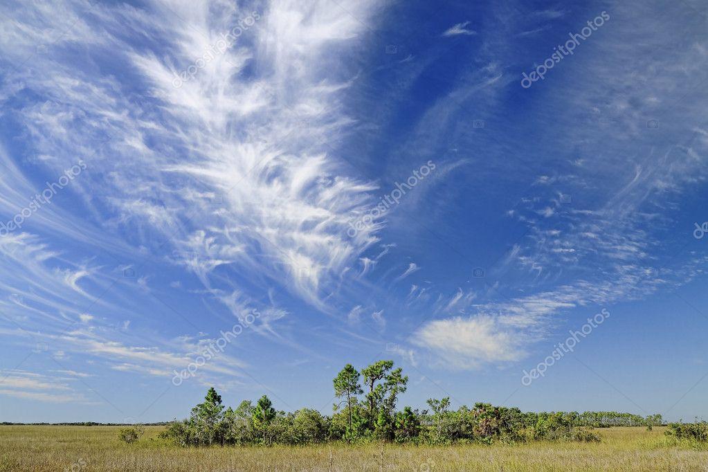 Cirrus Clouds over the Florida Everglades