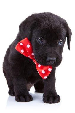 Handsome black puppy