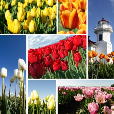 A collage of beautiful colorful tulips stock vector