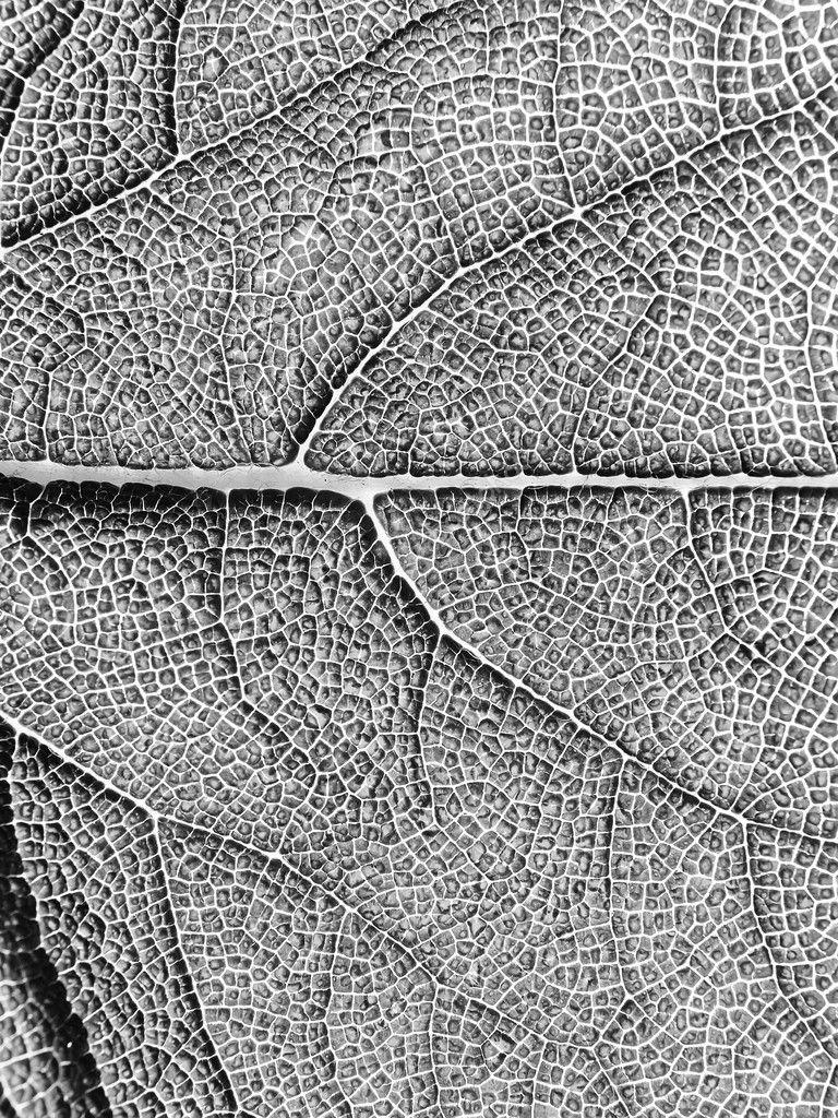 Leaf texture, macro.