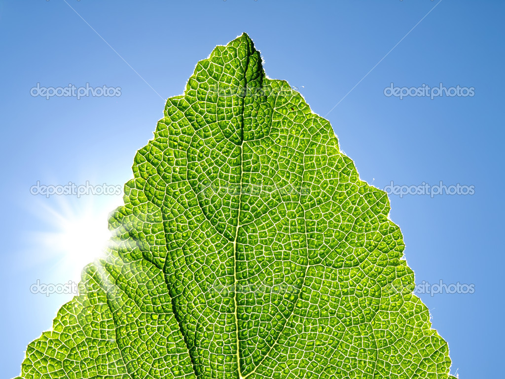 Green leaf against the blue sky.