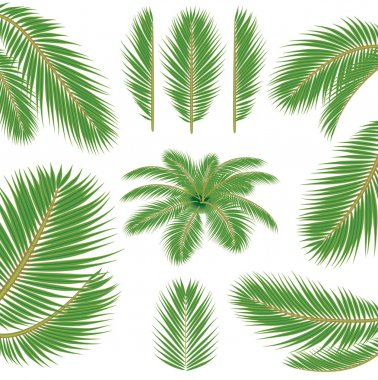 Palm leaves. Vector brush