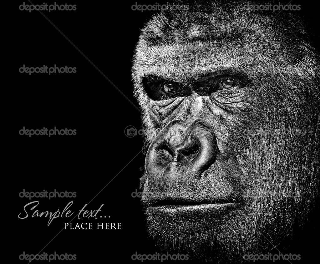 Black and white monkey portrait