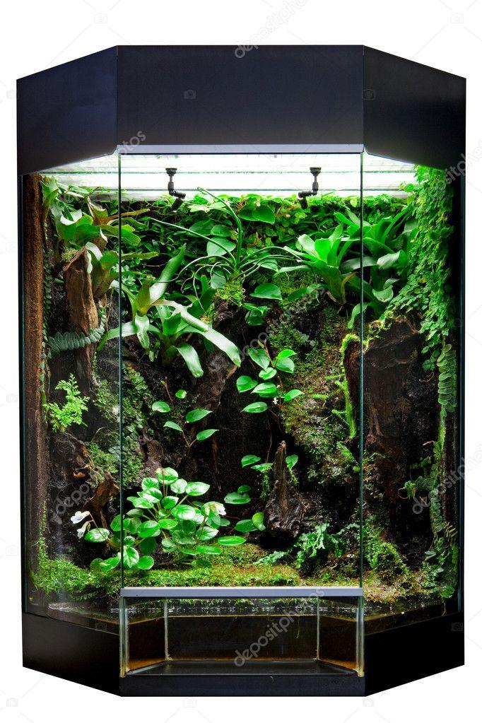 Terrarium for tropical rainforest pets