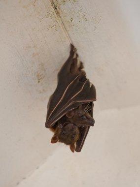 Bat with child