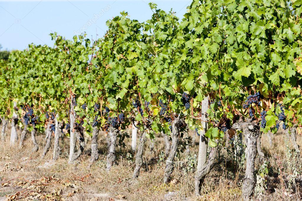 Купить виноградник во франции регион бордо вилла в аликанте аренда