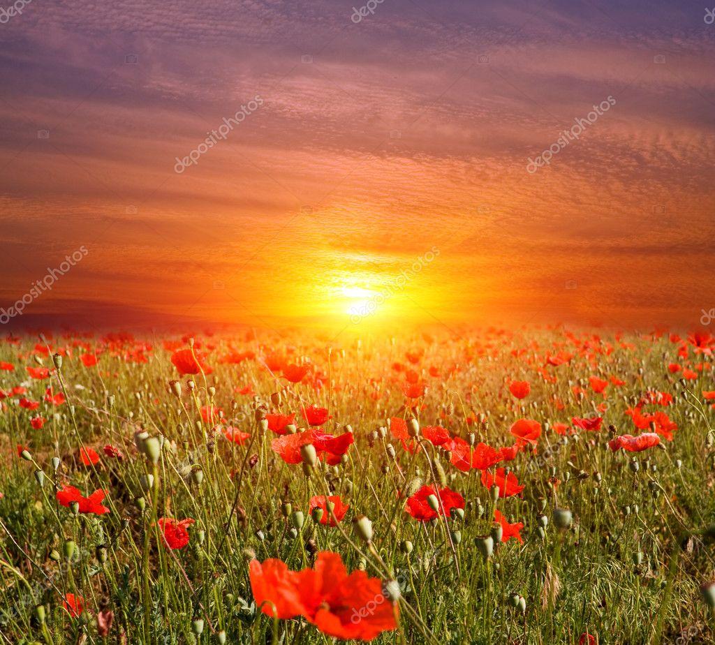 Tramonto sul prato di fiori — Foto Stock © pklimenko #5910160