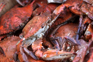 Hot and Dirty Crabs