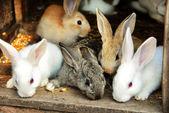 Fotografia famiglia di conigli coniglietto
