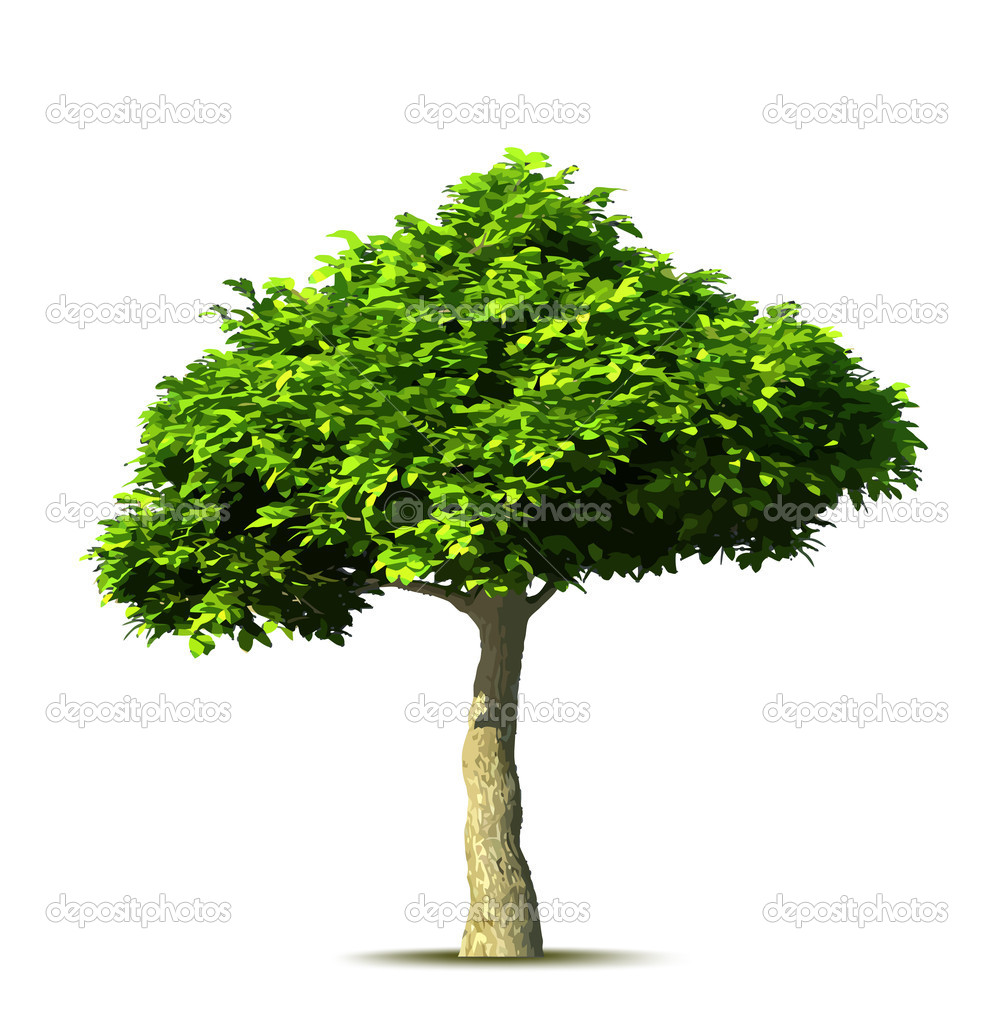 Green tree. Vector