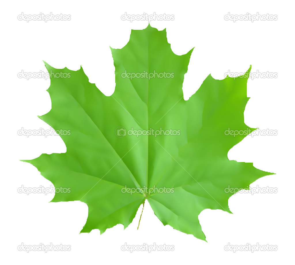 Leaf Translation To Spanish Pronunciation And Forum Discussions